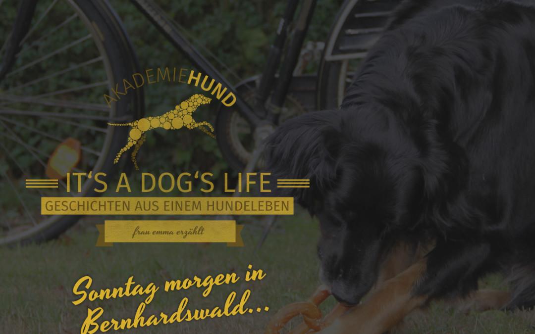 Emma erzählt: Sonntag Morgen in Bernhardswald…
