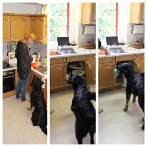 Hund hilft bei Küchenarbeit