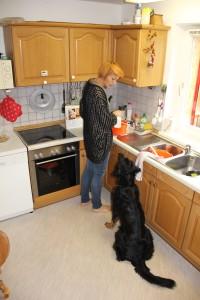 Hund in der Küche