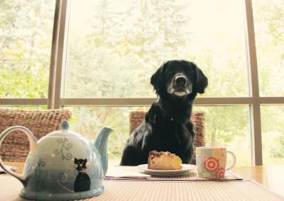Hunde als Hilfe im Haushalt - geht das?