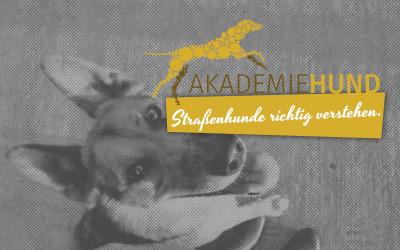 Tierschutz: Den Hund aus dem Ausland verstehen lernen