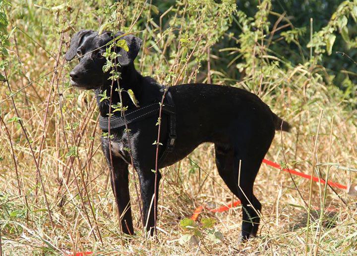 Strassenhund Tommy aus Griechenland