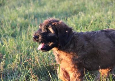 Vom Welpen bis zum erwachsenen Hunde