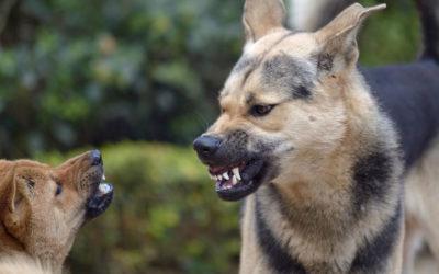Aggression bei Hunden – Warum beißen Hunde?