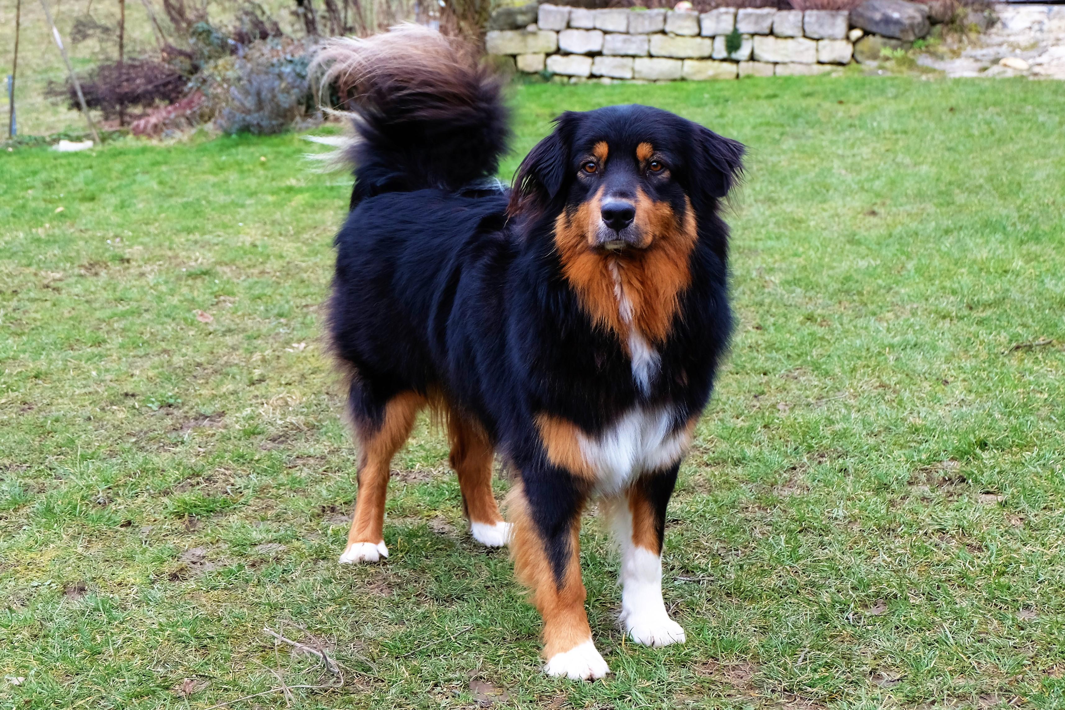 Samson - Hundeschule Akademie Hund Team des Monats März
