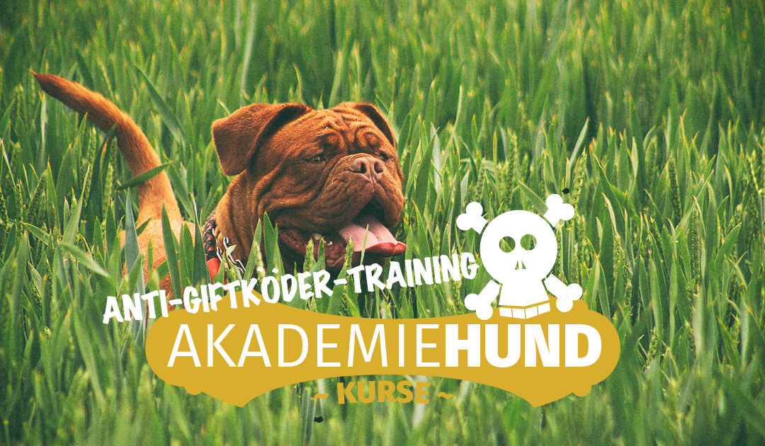 Anti-Giftköder-Training (Kompaktkurs)