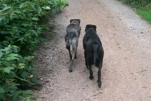 Diego und Labrador-Mischling Ignaz