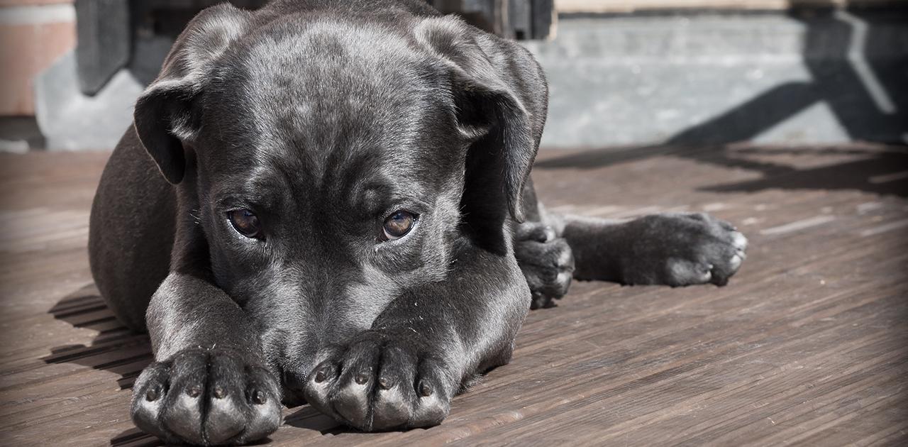 Hunde haben oft Angst an Silvester