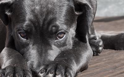 Silvester: Notfall-Tipps für Hundehalter