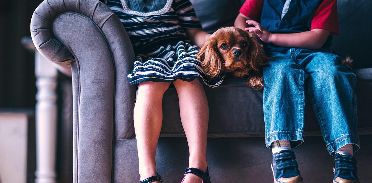 Weniger Stress für Hunde an Silvester - so klappts (Quelle: Pixabay)