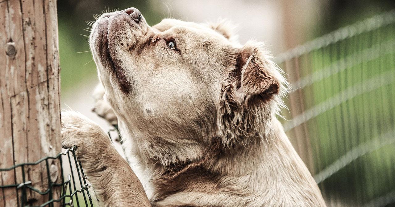 Hunde aus dem Ausland richtig verstehen