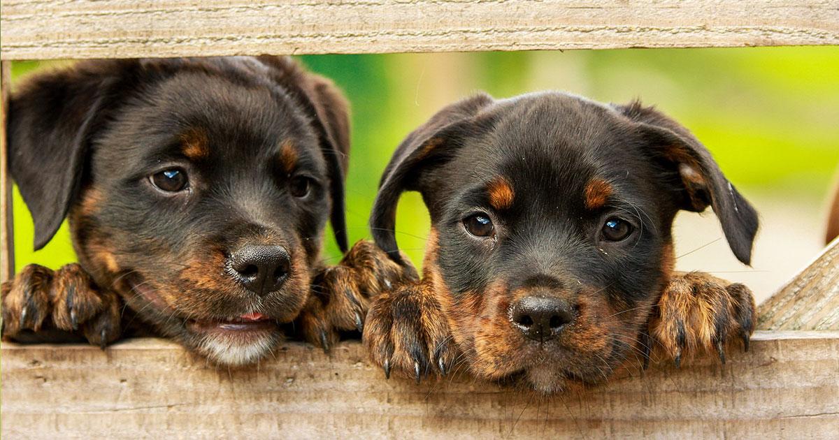 Hundewelpen - eine gute Kinderstube ist essentiell