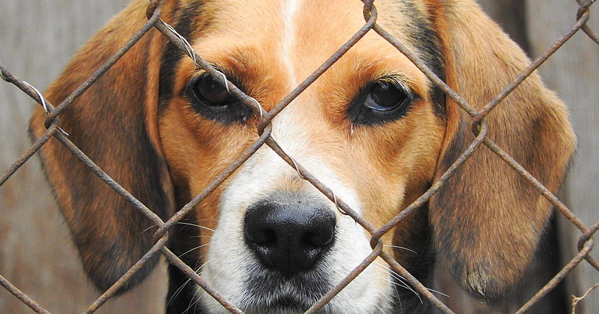 Ratgeber - kommt mein neuer Hund aus dem Tierheim?
