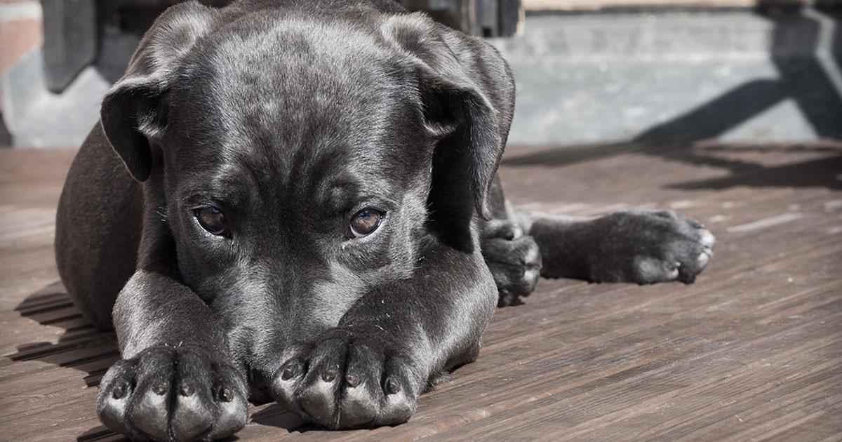 Silvester-Notfall-Tipps für Hundehalter