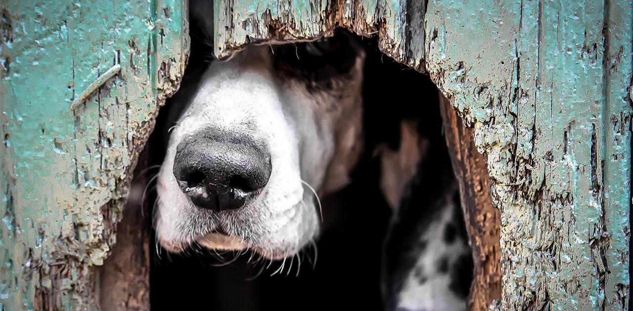 Seminar Akademie Hund: Hunde aus dem Ausland / Tierschutz