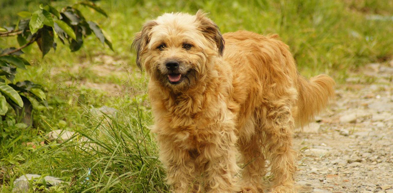 Seminar: Hunde aus dem Ausland verstehen
