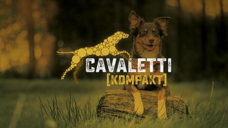 Cavaletti Beschäftigungskurs für Hunde
