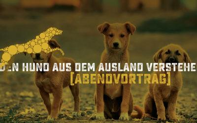 Den Hund aus dem Ausland verstehen