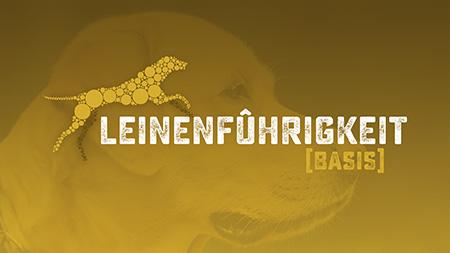 Basiskurs Leinenführigkeit, Akademie Hund, Hundeschule, Regensburg