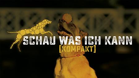 Kompaktkurs Schau was ich kann - Hundeschule, Akademie Hund, Regensburg