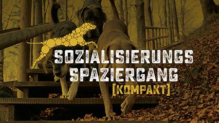 Sozialisierungsspaziergang Hundeschule Akademie Hund, Sissy Kreid