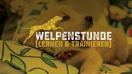 Welpenstunde, Training für Hundewelpen bei der Hundeschule Akademie Hund