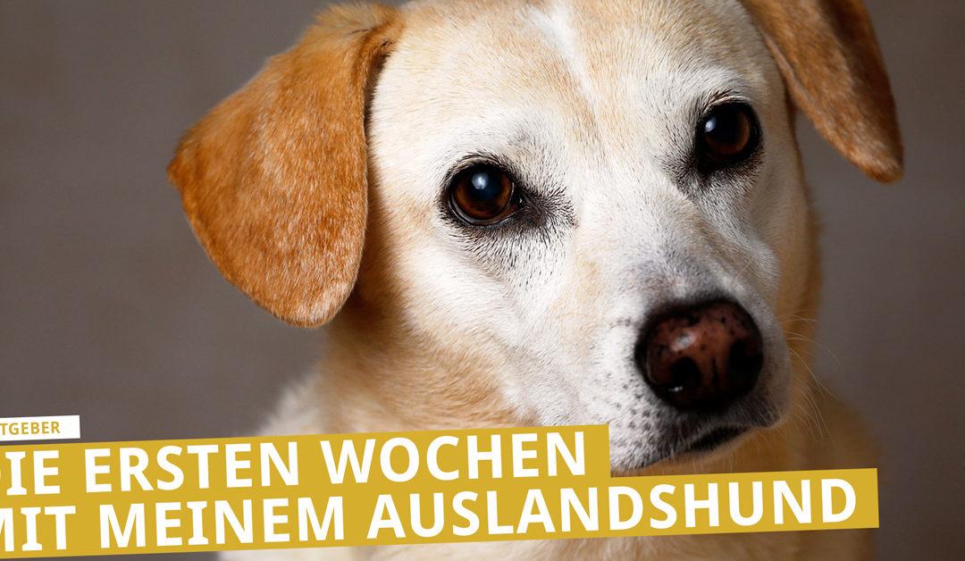 Mein Hund aus dem Ausland – die ersten Wochen mit meinem Auslandshund