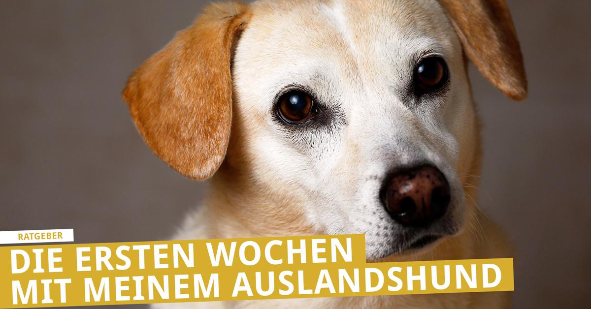 Eingewöhnung Hunde aus dem Ausland