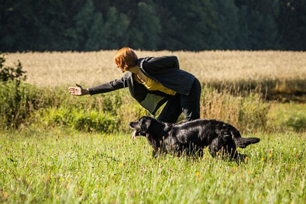 Die Wahl der richtigen Hundeschule