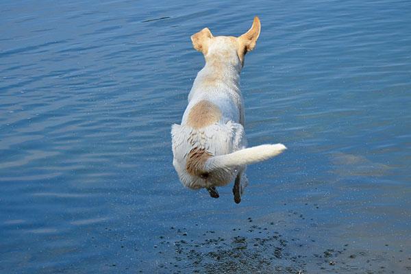 Ein gesunder Hund ist ein glücklicher Hund