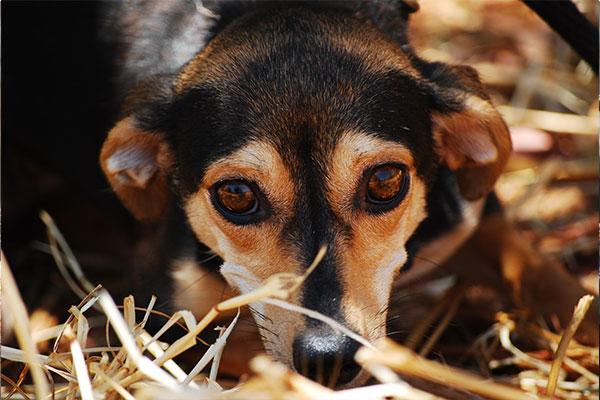 Hund versteckt sich nach Adoption