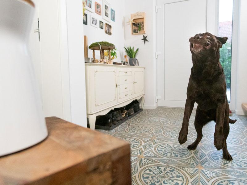 Hund fängt Leckerchen aus Furbo-Kamera