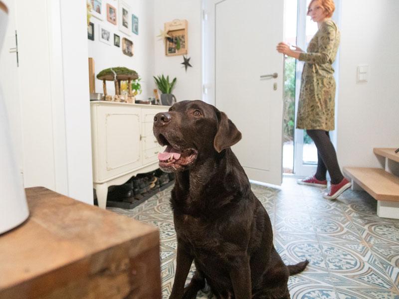 Furbo Dogcamera - kann deinem Hundhelfen, alleine bleiben zu lernen