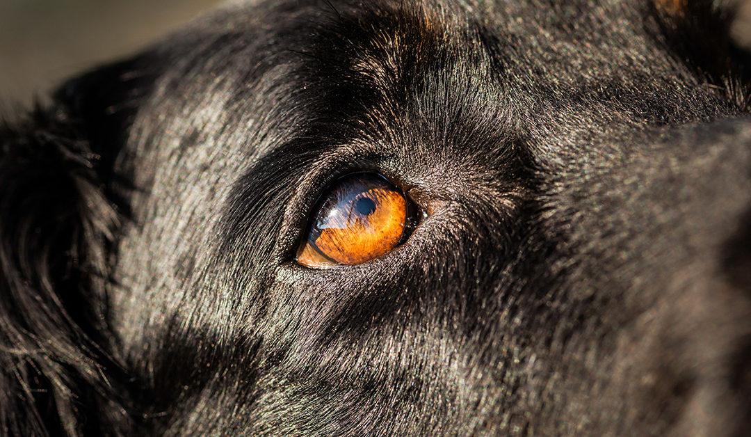 Hunde aus dem Ausland-Tierschutz verstehen lernen