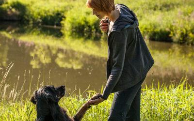 Sprachkurs Hund – Dein Grundwortschatz