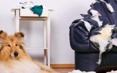 Versicherungen für meinen Hund? Macht das Sinn?