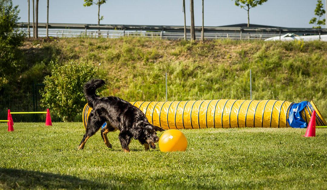 28.06.2019: Lernverhalten – wie lernt mein Hund?