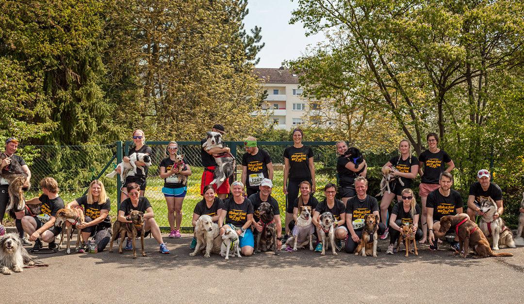 4. Akademie Hund Lauf 2019