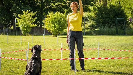 Hundetraining, Distanz und Revieren