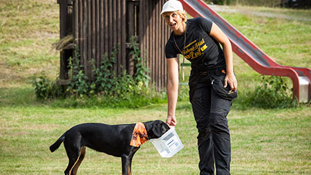 Hundetraining, Nasenarbeit