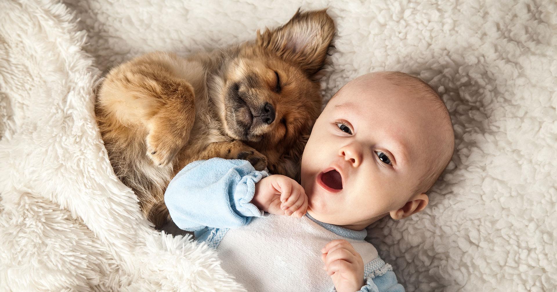 Baby und Hunde -Freunde für s Leben