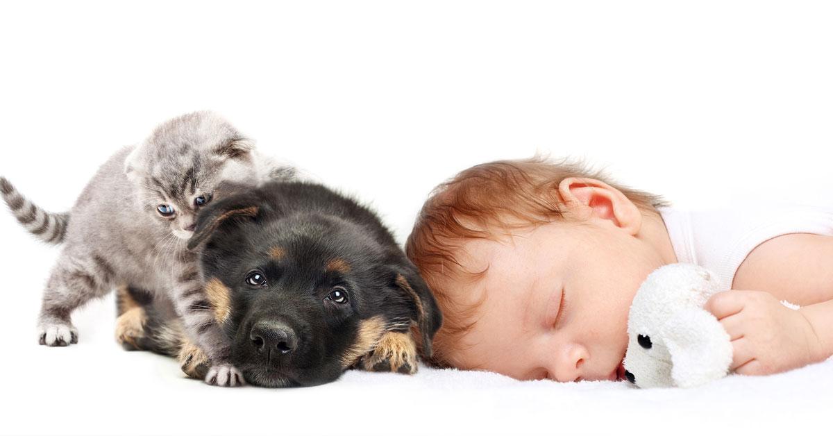 Hund, Katze, Baby?