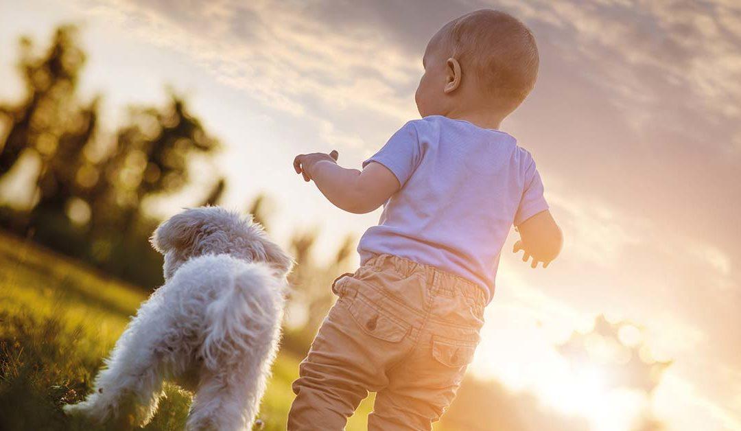 Baby und Hund – geht das?