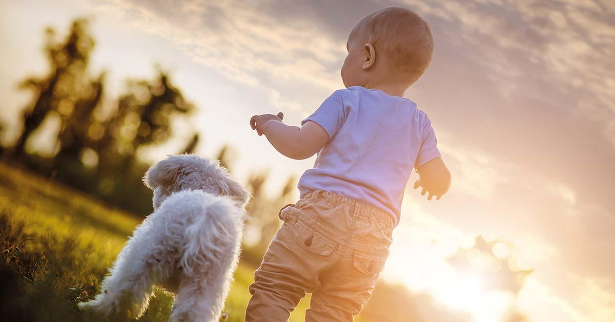 Schangerschaft: Zum Hund kommt ein Baby