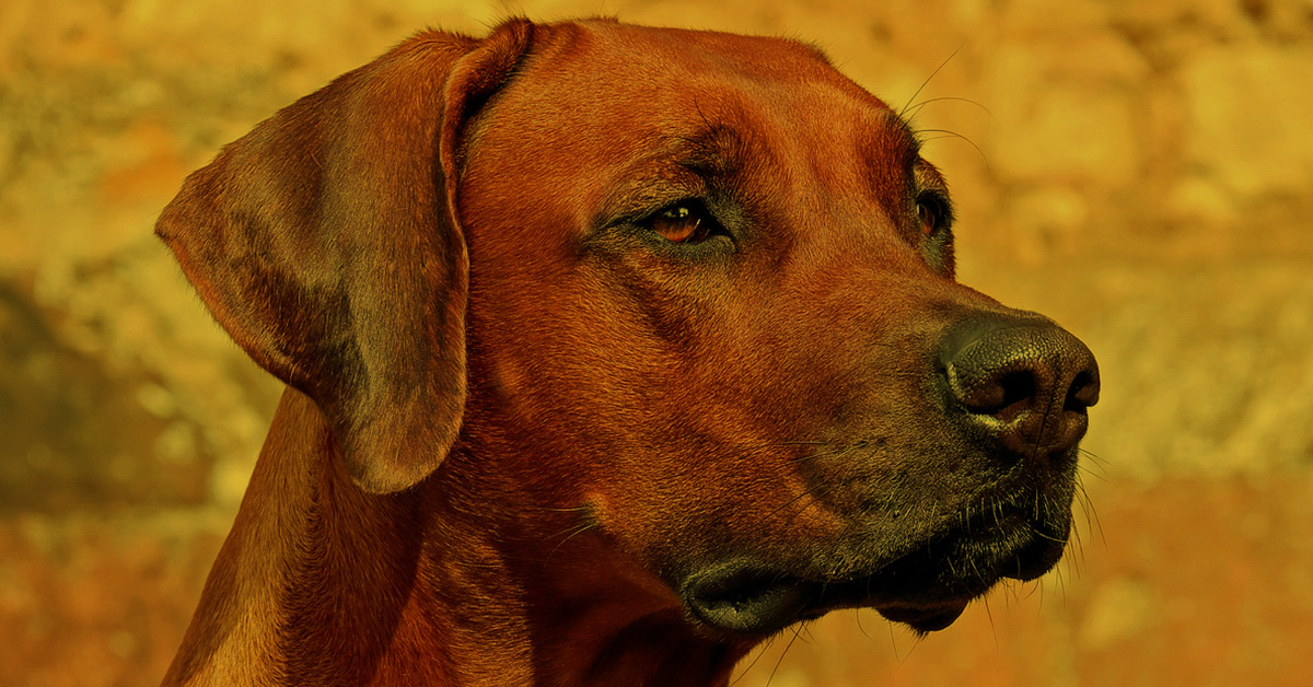 Vortrag Hunde aus dem Ausland verstehen