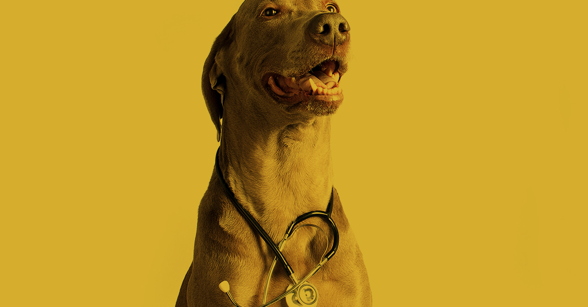 Schmerzen bei Hunden erkennen und verstehen, Vortrag, Ehrenspeck, Kreid