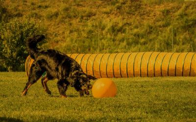 26.06.2019, Vortrag: Lernverhalten – wie lernt mein Hund?