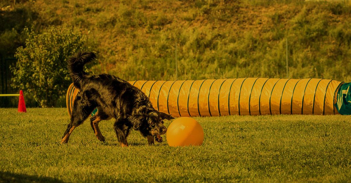 Vortrag Lernverhalten - wie lernt mein Hund eigentlich?