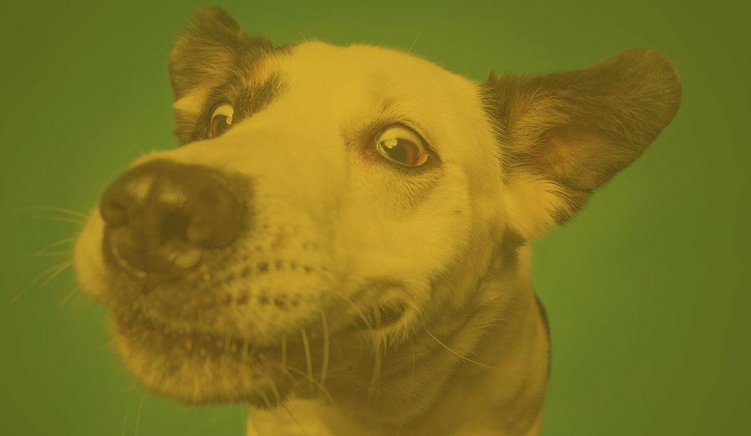 12.03.2020: Die Persönlichkeit des Hundes und ihre Auswirkungen