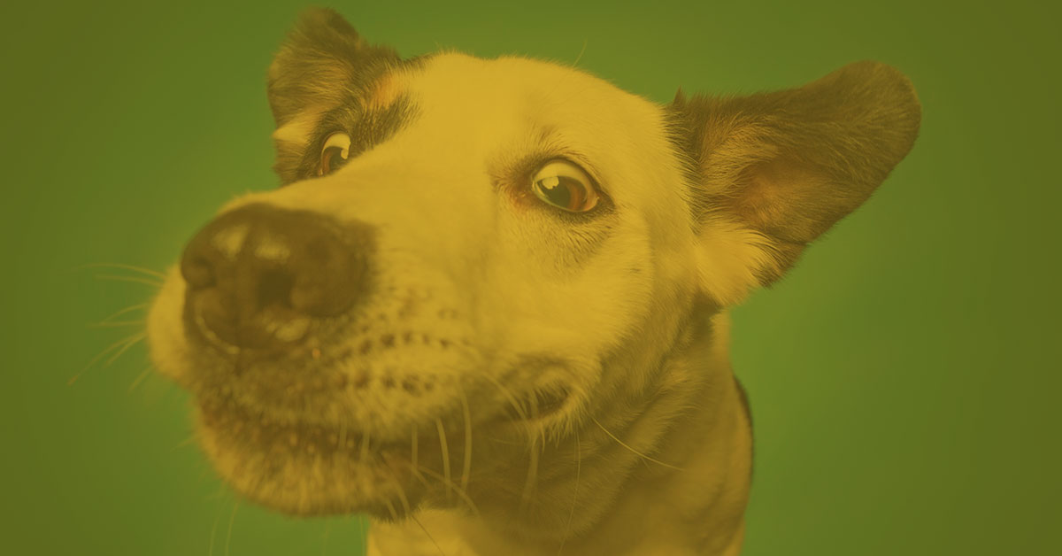 Vortrag: Persönlichkeit des Hundes